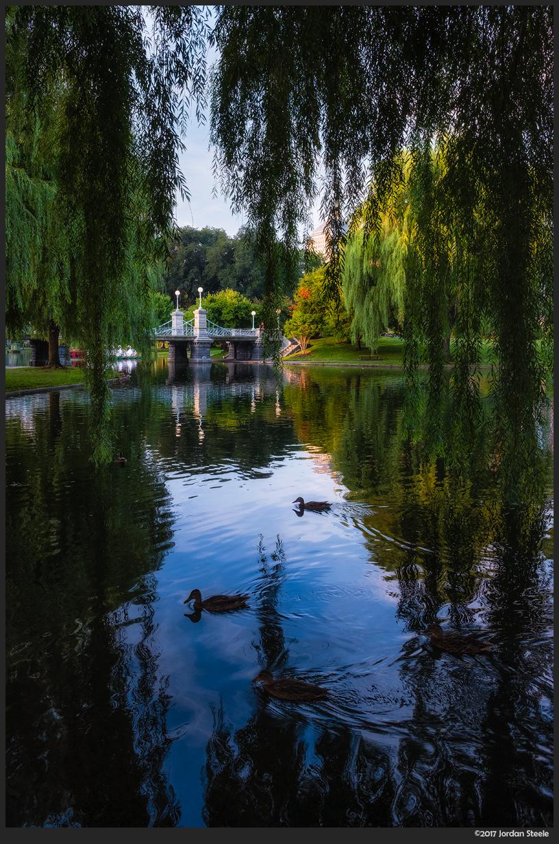 public_garden.jpg
