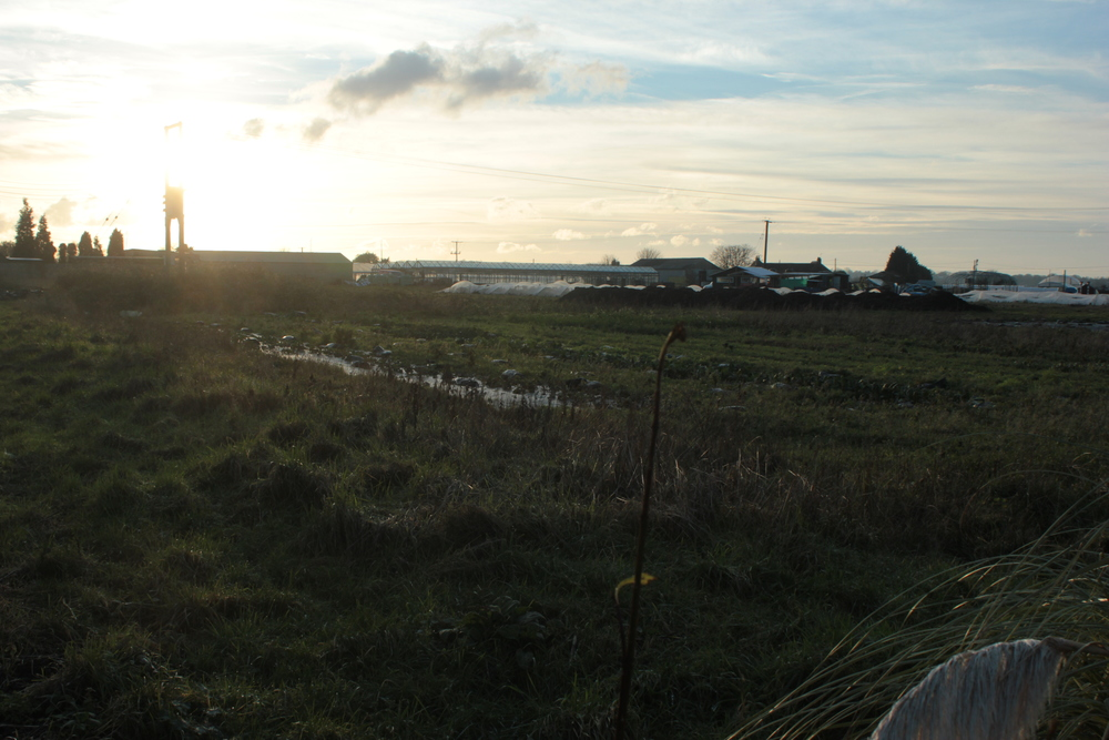 The farm site from the boundary of the premises. You can see the old glass green houses to the left and new polytunnels on the right.
