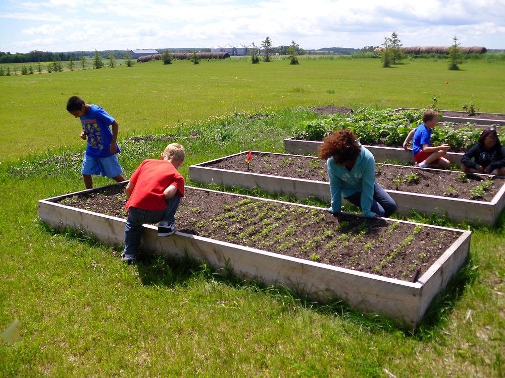 school garden 2011 012.jpg