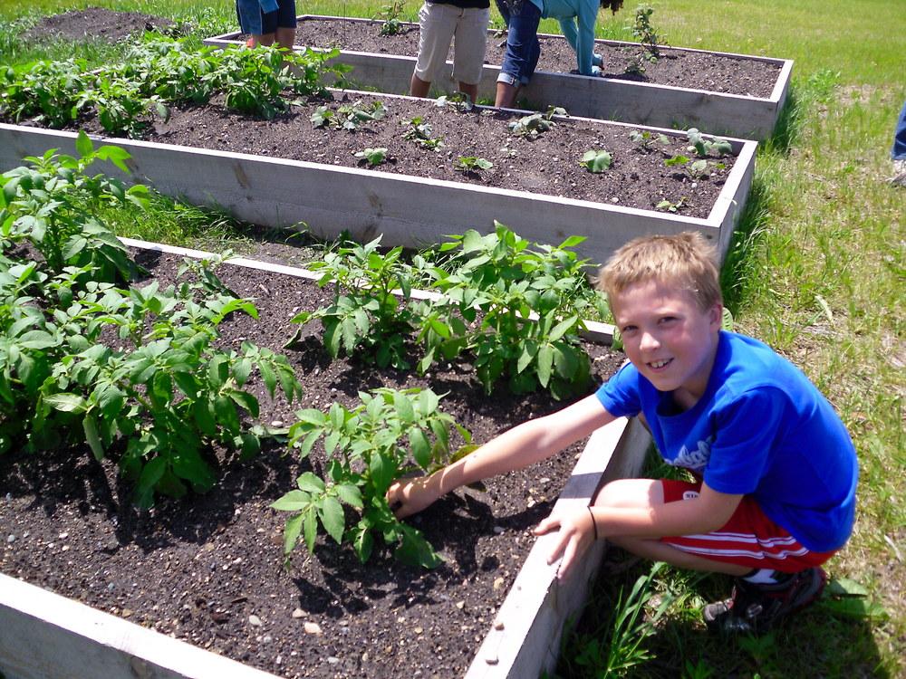 school garden 2011 015.jpg