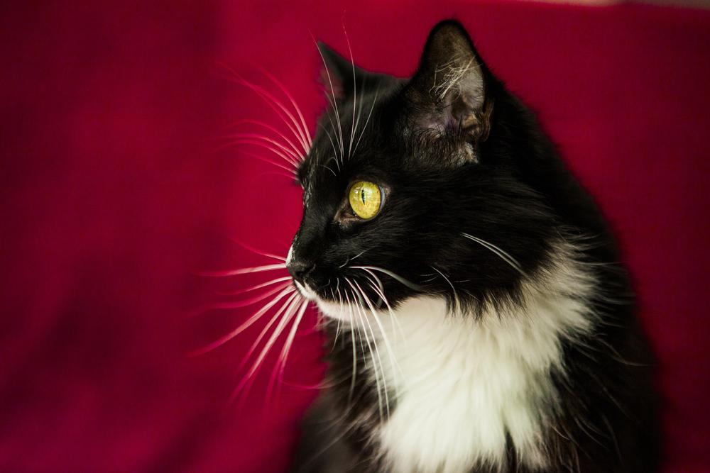 cat_MG_8451.jpg