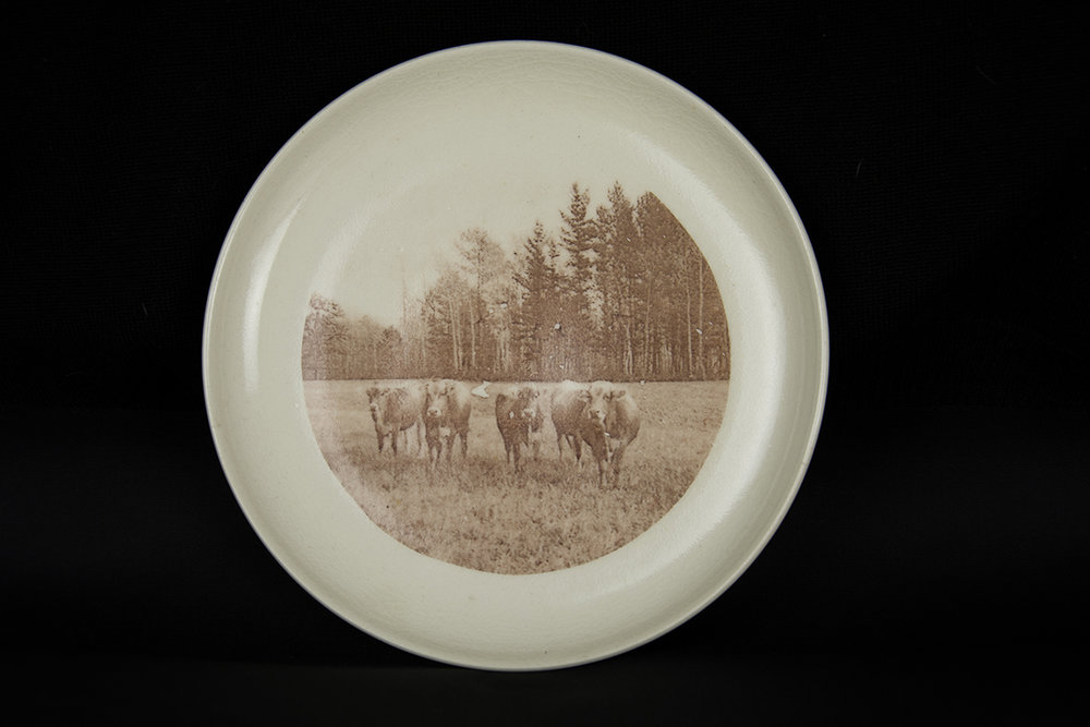 "Cows in Pasture  2016. Glaze and fired-on decals on porcelain. - 7.5"" diameter"