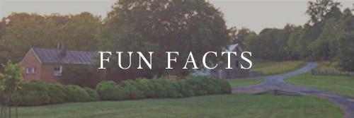 fun-facts-about-liz-cook.jpeg