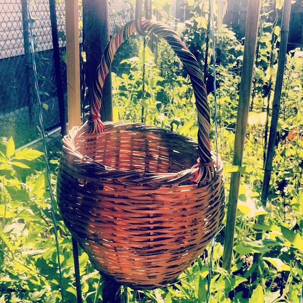 Fig basket