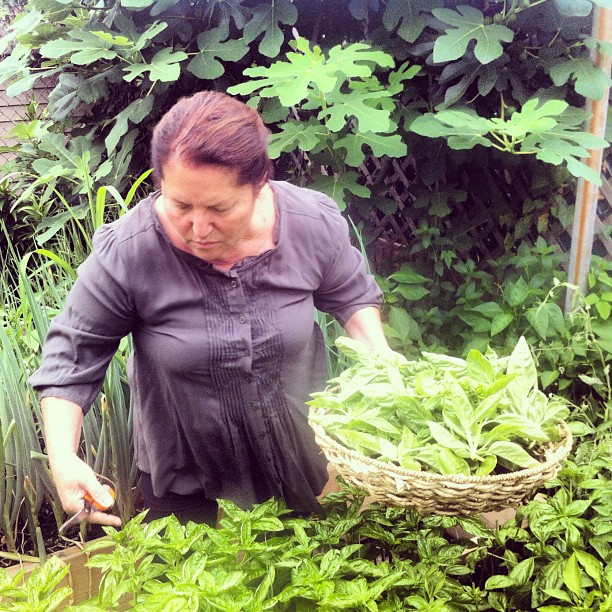 Basil picking, Nonna style