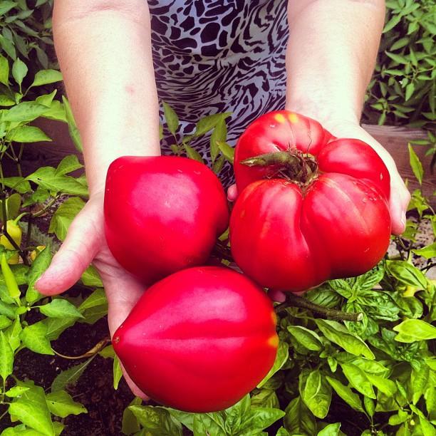 Nonna's organic tomatoes