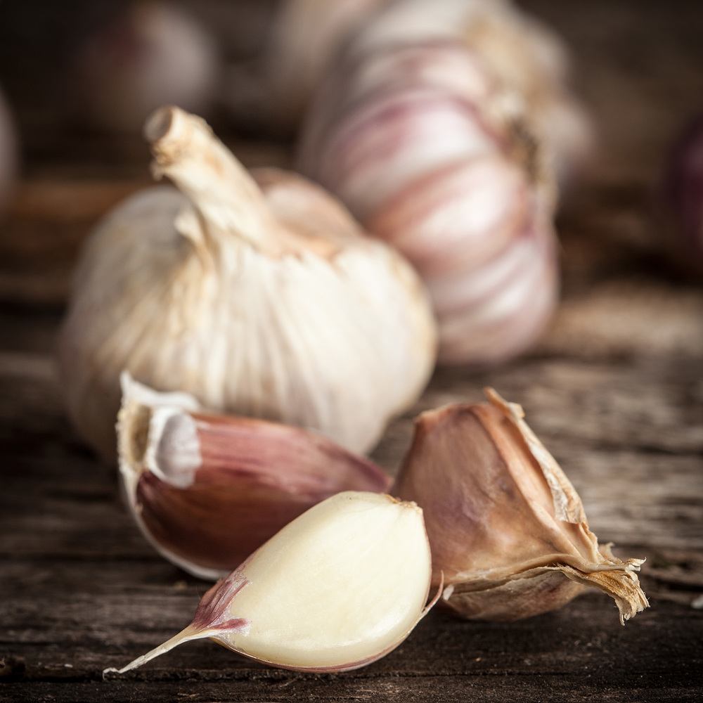 GARLIC_SQ.jpg