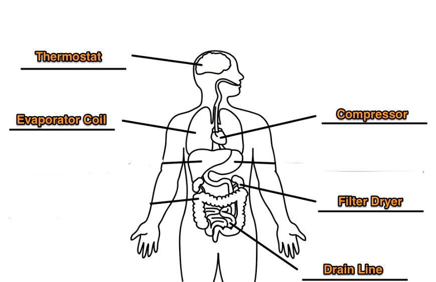 Body Labeled with Air Conditioning Part names