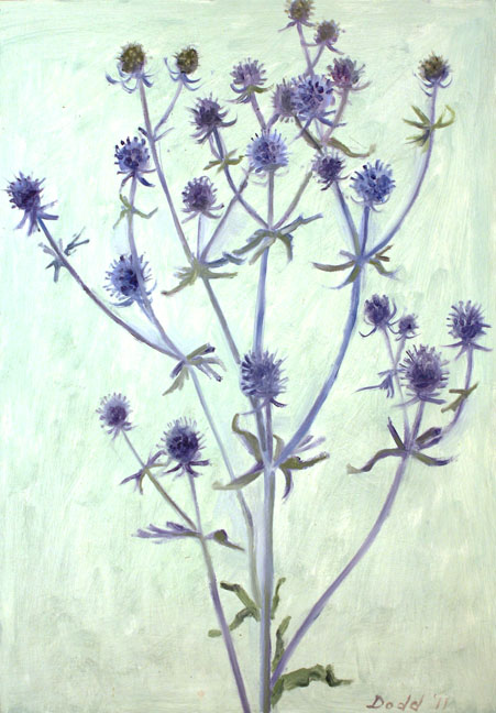 LD11_08SeaHolly_low.jpg