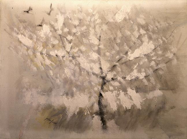 Cerisier Sous la Neige
