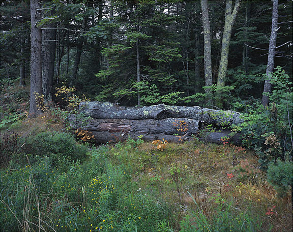 Trees_Logs_Lichen.jpg