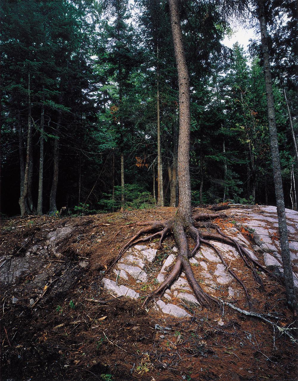 TreesRootsRocks.jpg