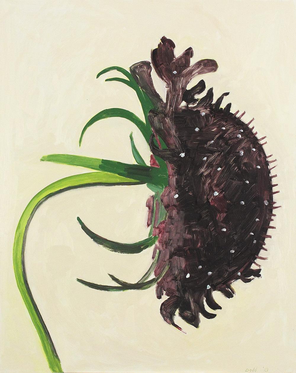 Black Scabiosa (Profile)