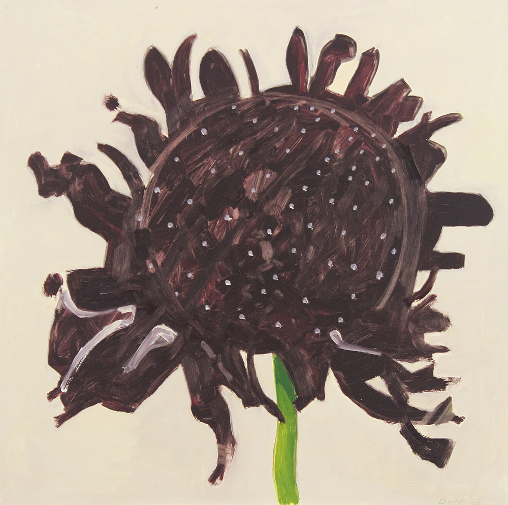 Black Scabiosa, Front View