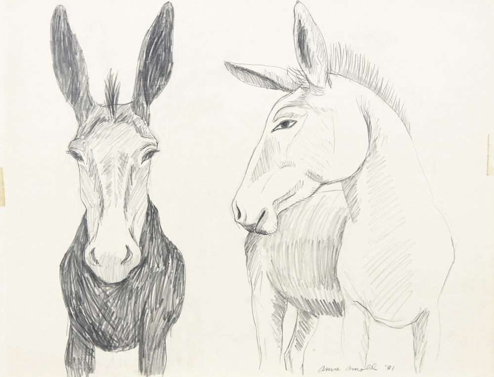 Donkey and Mule