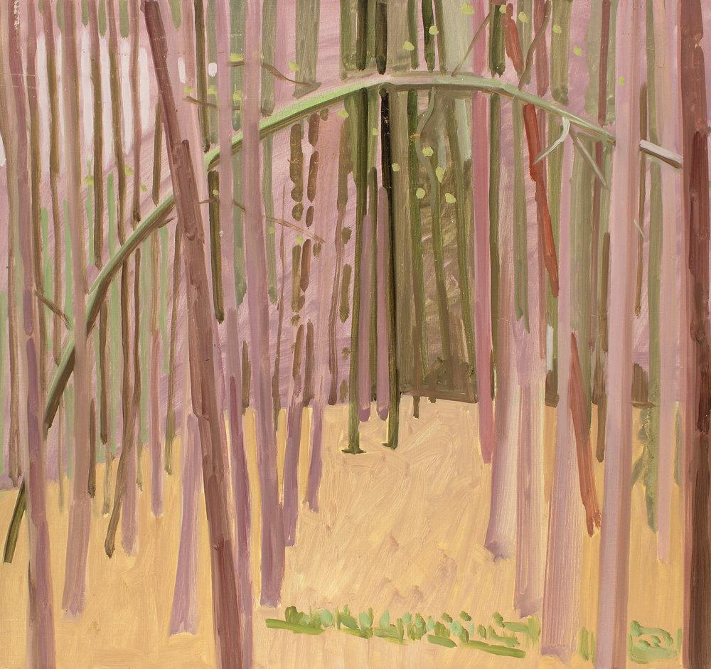 Tillman's Ravine Woods