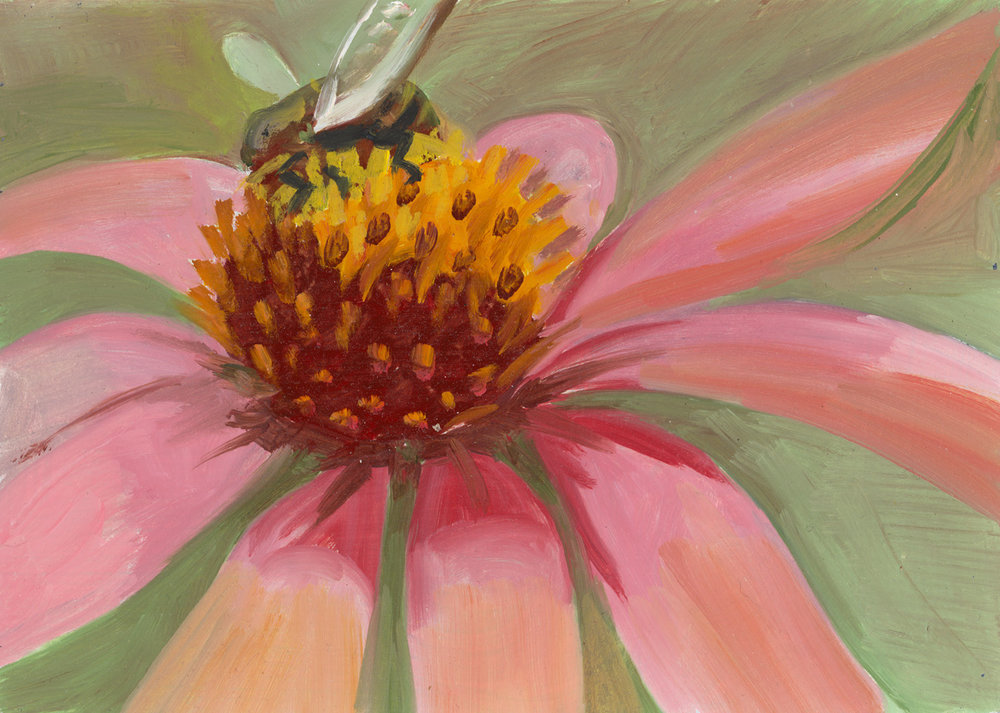 Echinacea + Bee