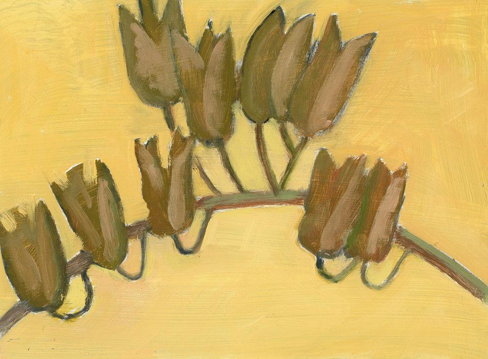 Black Cohosh Seedpods