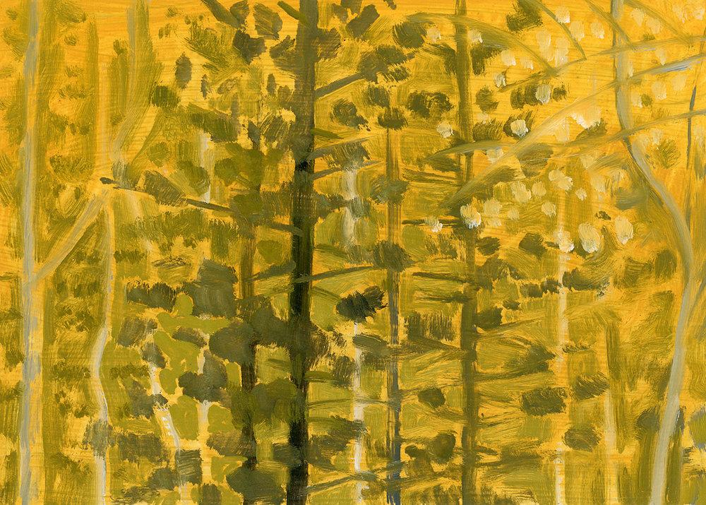 Golden Fall Woods