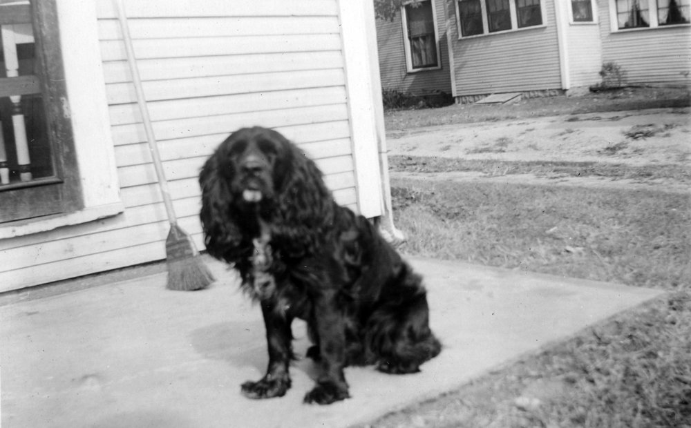 Noogie  They had a cocker spaniel dog named Noogie. He wasn't allowed in the house and was tied up outside in the yard most of the time. Eventually he got sick and died and Betty Jo always  thought it was from being outside too much.