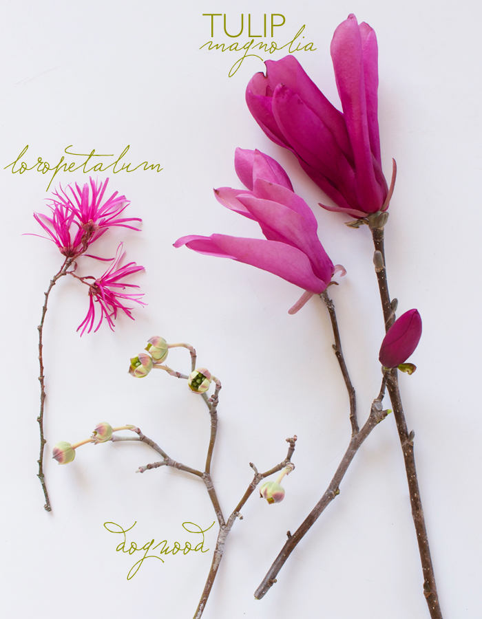 Anatomy of Flora: Spring I  by Guest Editor Tami Ramsay | CLOTH & KIND