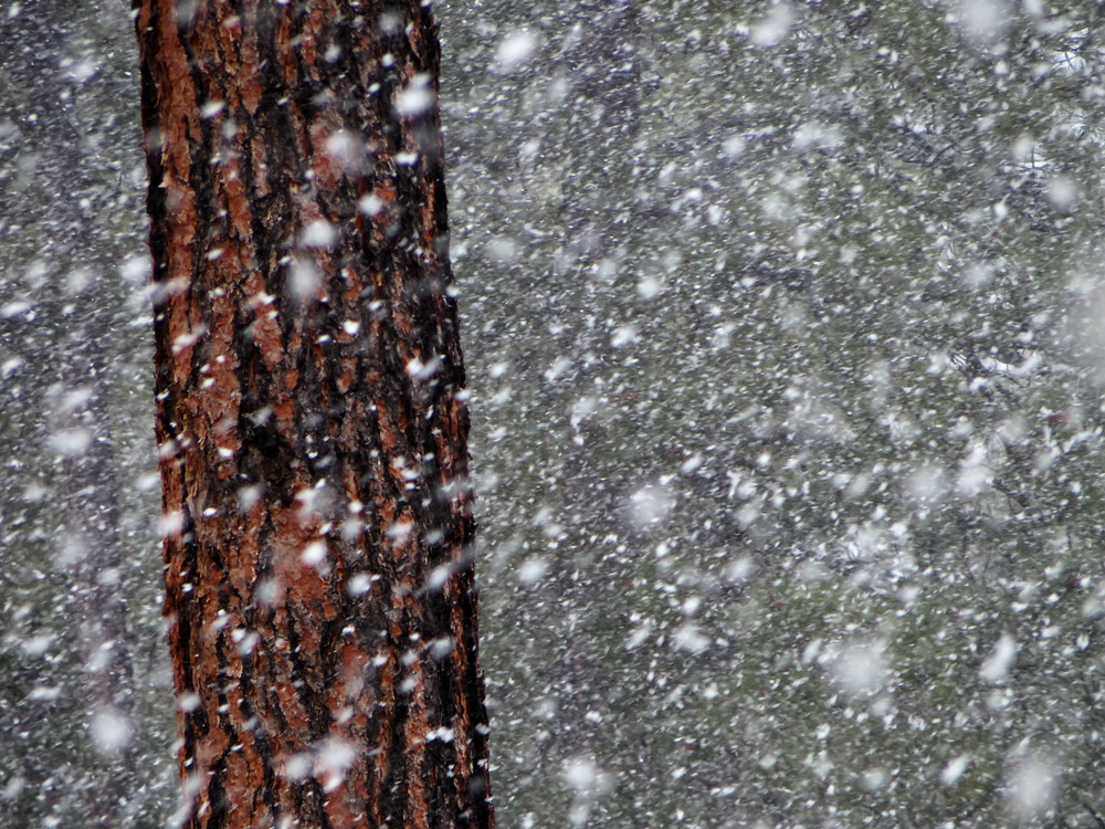The snow falling at Jacob Lake.