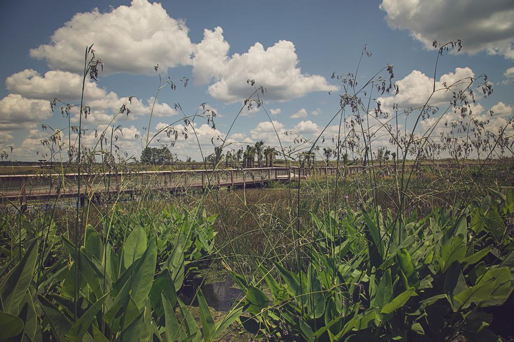 sweetwater-branch-sheet-flow-gainesville-paynes-prairie-patrick-sanders-4.jpg