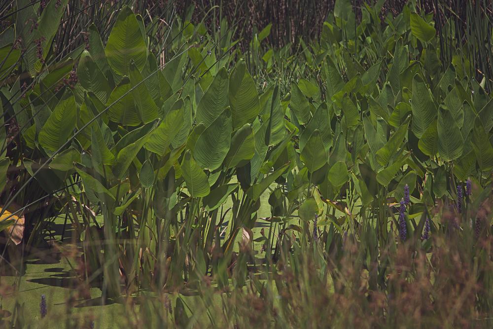 sweetwater-branch-sheet-flow-gainesville-paynes-prairie-patrick-sanders-2.jpg