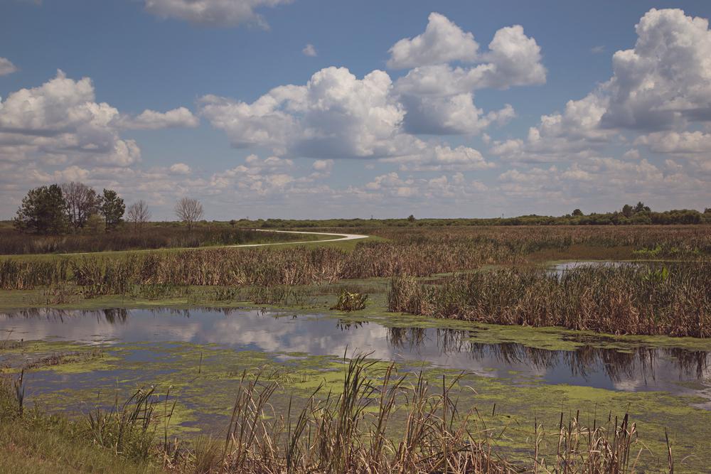 sweetwater-branch-sheet-flow-gainesville-paynes-prairie-patrick-sanders-11.jpg