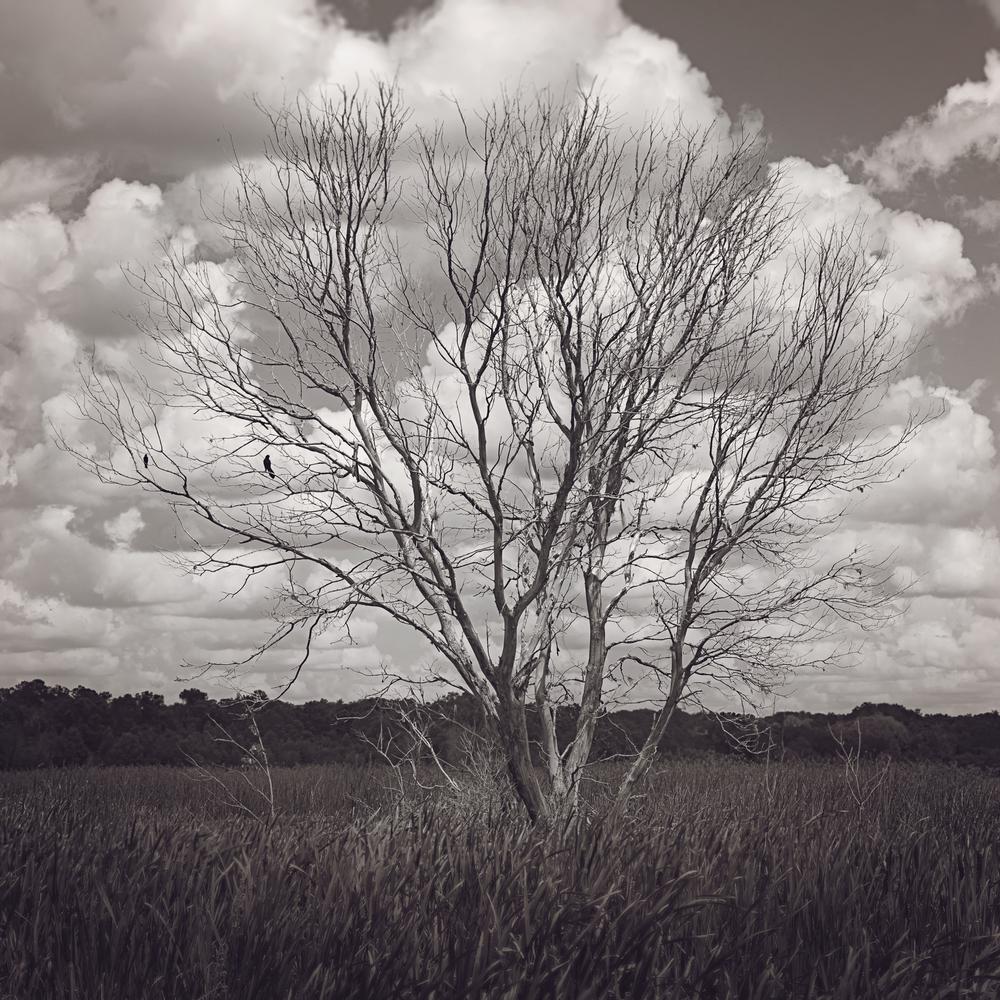 sweetwater-branch-sheet-flow-gainesville-paynes-prairie-patrick-sanders-9.jpg