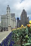 2005_Chicago.jpg
