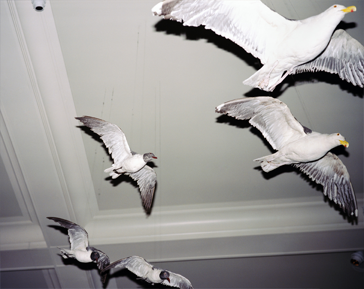 Gulls of Natural History