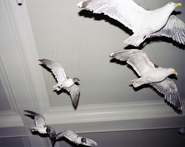 Gulls of Natural History