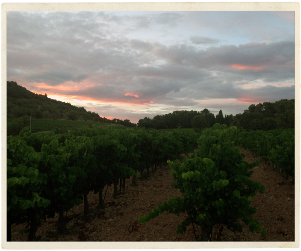 A beautiful sunset in the vines greeted me on my first night in Provence.