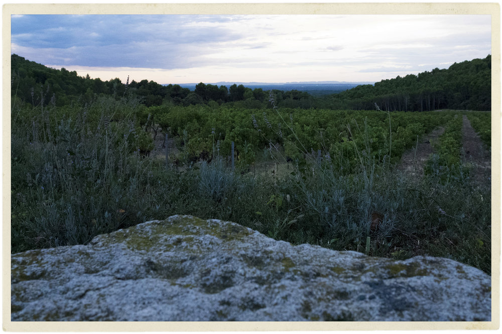 The twilight hours of apéro in the vineyard.