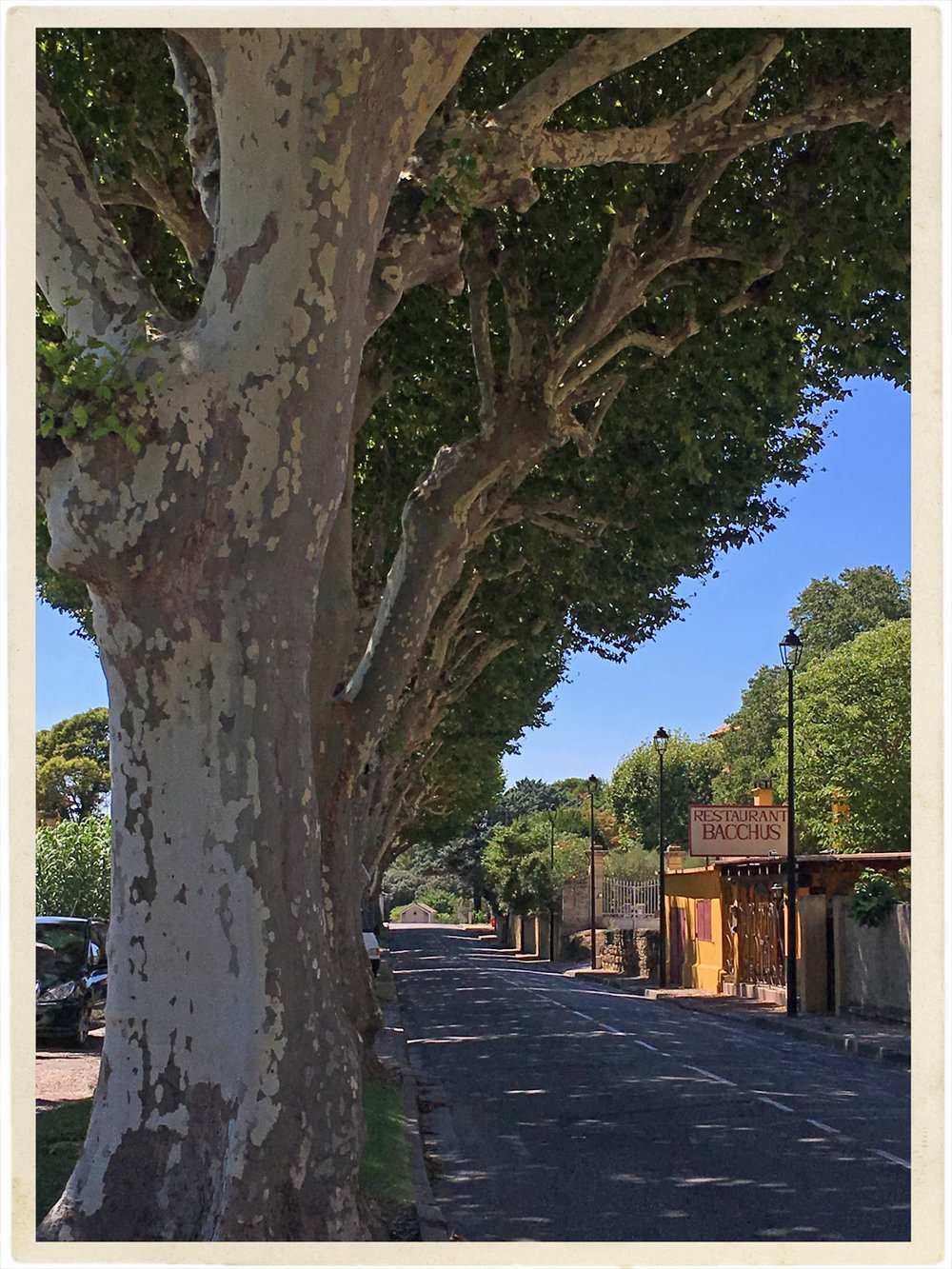 Main street into Beaumes de Venise with those perfect provençal Platanes trees.