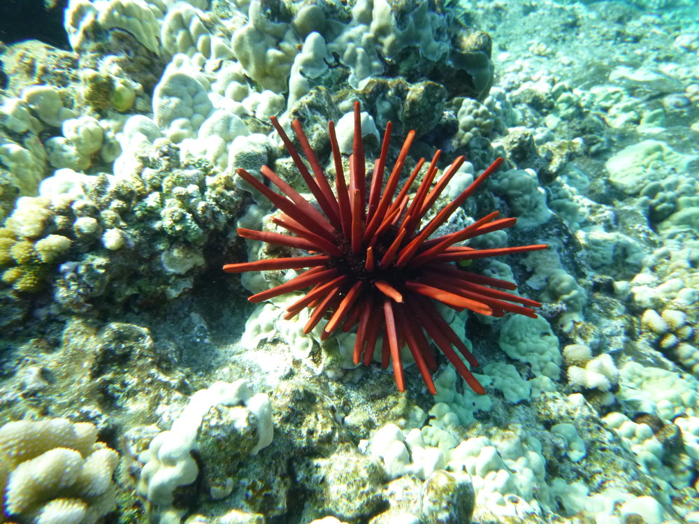 Sea anemone?