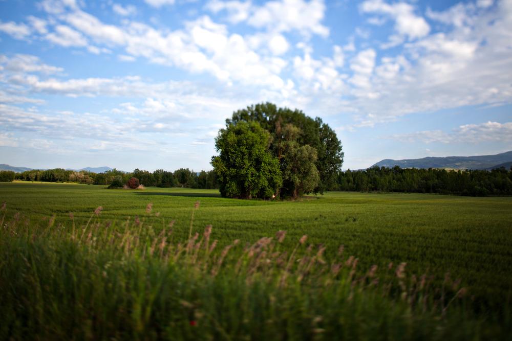 Landscapes-1.jpg
