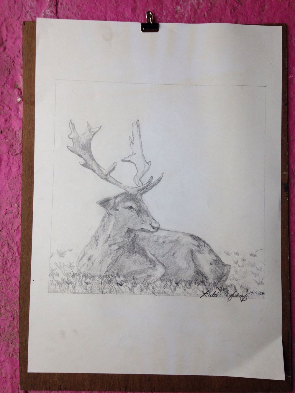 Deer sketch. By Katie. Aged 12   Pencil on paper
