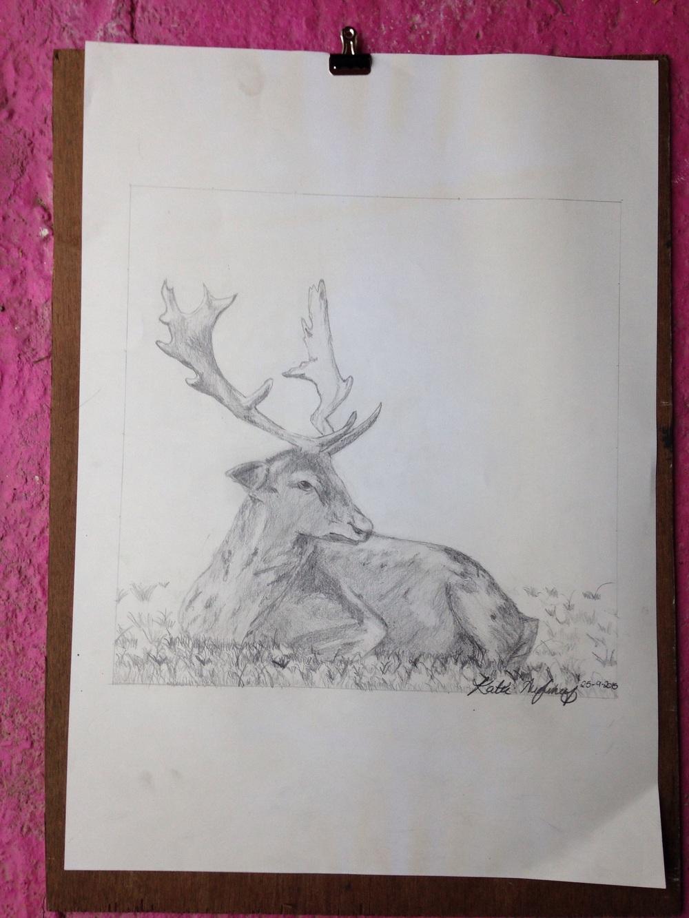 Deer sketch. By Katie. Aged 12  Pencil on paper