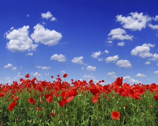 In Flanders fields the poppies blow,  Beneath the crosses, row on row,  That mark our place; and in the sky,   The larks, still bravely singing, fly,   Scarce heard amid the guns below.