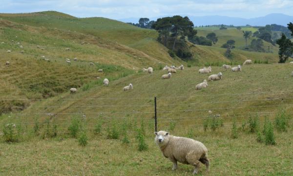 One of a few million friends in New Zealand.
