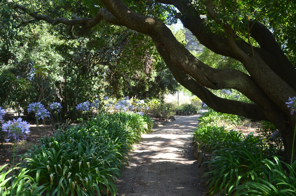 One of many paths around Height House, Geelong, AU.