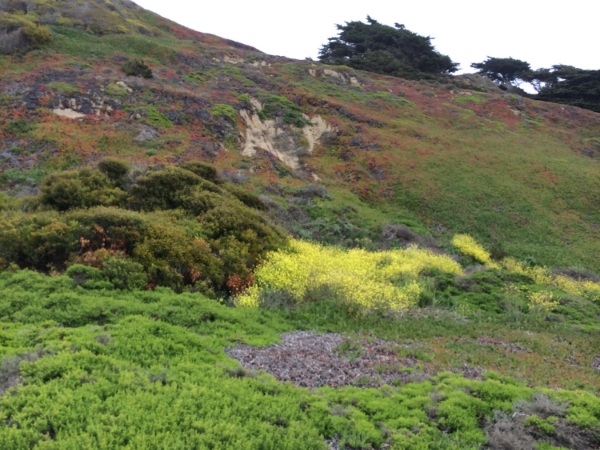 You can get a sense of the terrain and the wildflowers, even if the colors are not as vibrant as in real life.