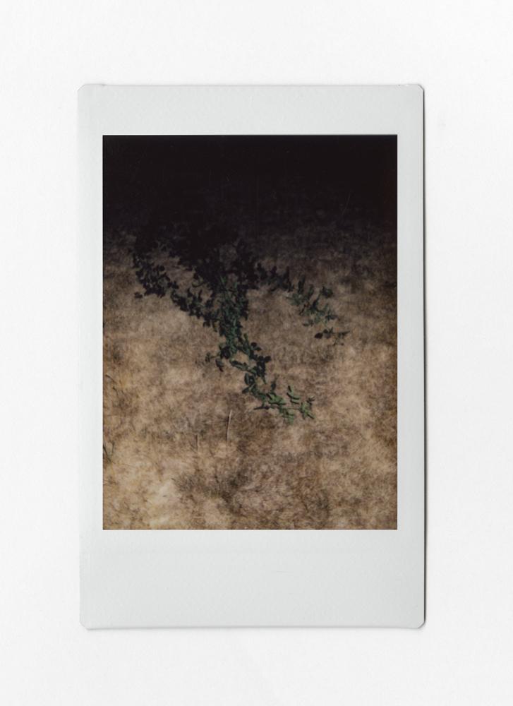 murney-linebreak-13.jpg