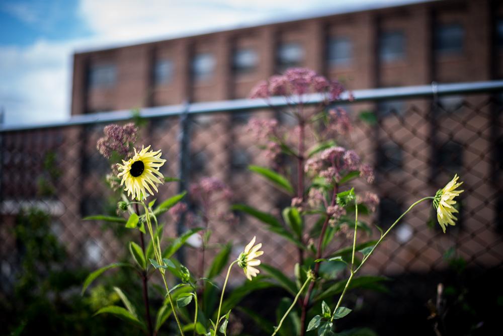 Garden and Park-2.jpg
