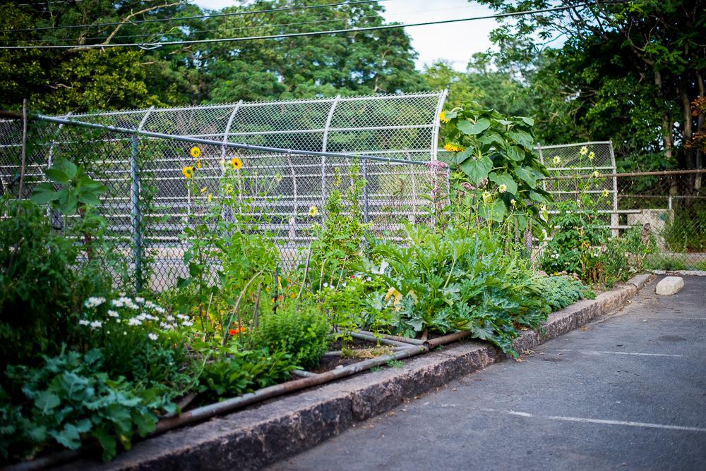 Garden and Park-3.jpg