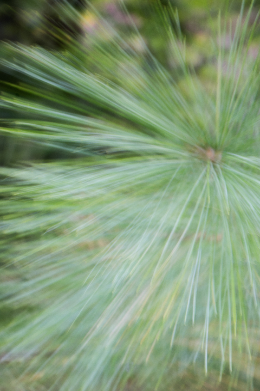 WinterHillStudio Pine Needles Blurred.jpg