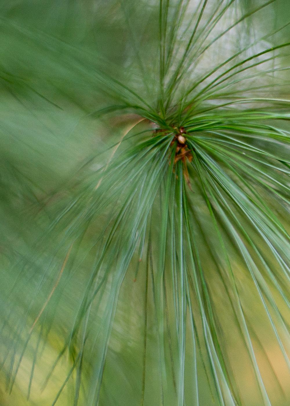 WinterHillStudio Pine Needles Green.jpg