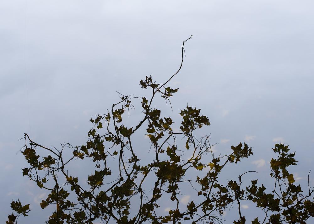 WinterHillStudio Tree Reflection in Water.jpg